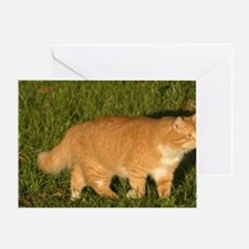 Orange tabby cat walking in the gras Greeting Card