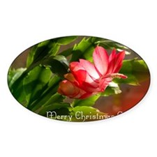 Christmas Cactus Cards Decal