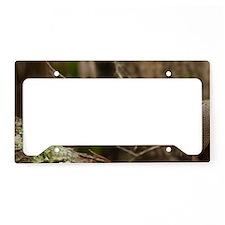 Nine-Banded Armadillo (Dasypu License Plate Holder