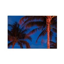 South Beach Palms / EveningSouth  Rectangle Magnet