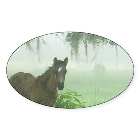 Florida Cracker colts in fog (Equus Sticker (Oval)