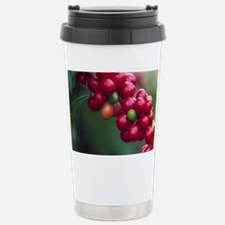 Coffee berries, Kona, Island of Stainless Steel Tr