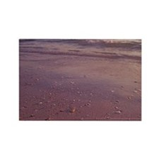 Queen conch onshore before sunset Rectangle Magnet
