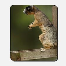 Sherman's fox squirrel on feeder (Sciuru Mousepad
