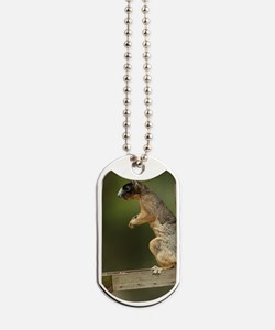 Sherman's fox squirrel on feeder (Sciurus Dog Tags