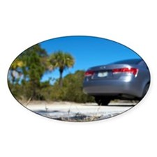 Jensen Beach. A gopher tortoise gra Decal