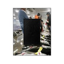 Fish Auction, Honolulu, Oahu, Hawaii Picture Frame