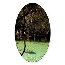 Manatees in freshwater spring, Blue Decal