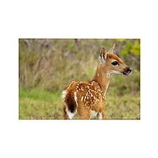 Key Deer fawn (Odocoileus virgini Rectangle Magnet