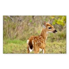 Key Deer fawn (Odocoileus virg Decal
