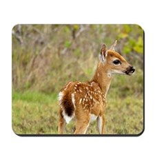 Key Deer fawn (Odocoileus virginianus cl Mousepad