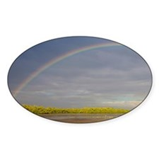Rainbow over Ding Darling, Ding Dar Decal