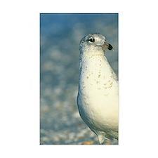 Ringbill Gull, Sanibel, FL Decal