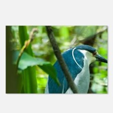 Black-crowned Night Heron Postcards (Package of 8)