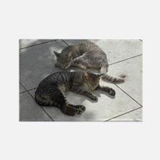 2 Cats Sleeping in Autumn Sunshin Rectangle Magnet