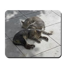 2 Cats Sleeping in Autumn Sunshine 09-22 Mousepad