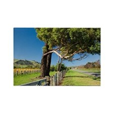 Kotinga Vineyard, Martinborough,  Rectangle Magnet