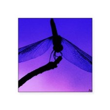 "calendar dragonfly at dusk Square Sticker 3"" x 3"""