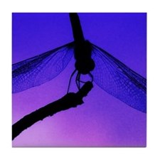 calendar dragonfly at dusk Tile Coaster