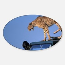 Adult Female Cheetah (Acinonyx juba Decal