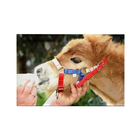 Orphaned Foal - Joy Rectangle Magnet