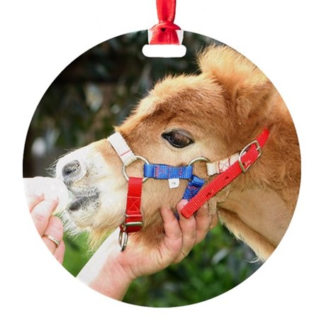Orphaned Foal - Joy Round Ornament