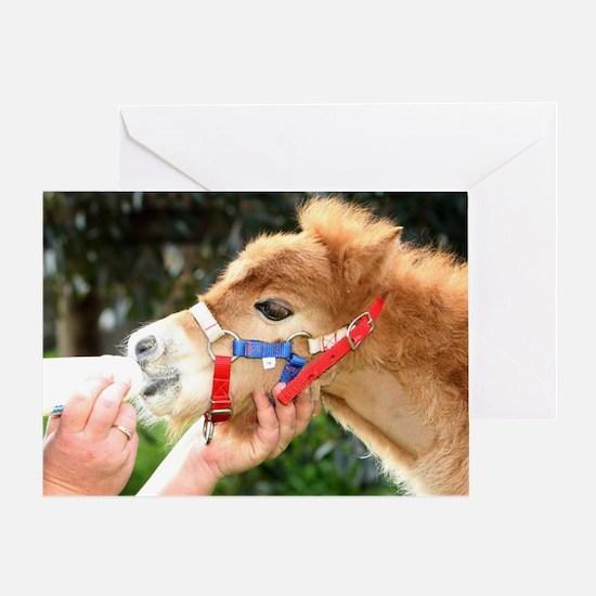 Orphaned Foal - Joy Greeting Card