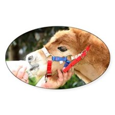 Orphaned Foal - Joy Decal