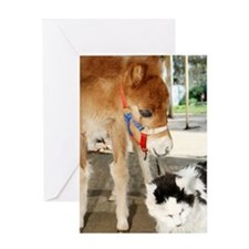 Orphaned Foal - Joy Greeting Card