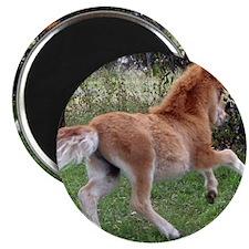 Orphaned Foal - Joy Magnet
