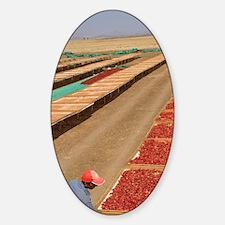 Man airing red peppercorns, sun-dri Sticker (Oval)