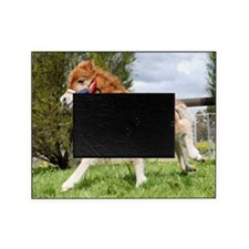 Orphaned Foal - Joy Picture Frame