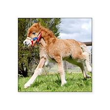 "Orphaned Foal - Joy Square Sticker 3"" x 3"""