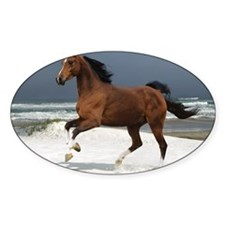 brown horse Decal