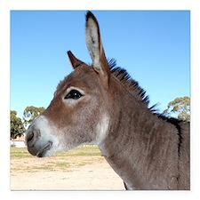 """Miniature Donkey Square Car Magnet 3"""" x 3"""""""