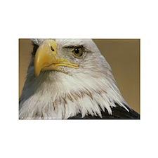 Eagle note Rectangle Magnet