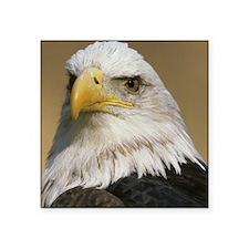 """Eagle pillow Square Sticker 3"""" x 3"""""""
