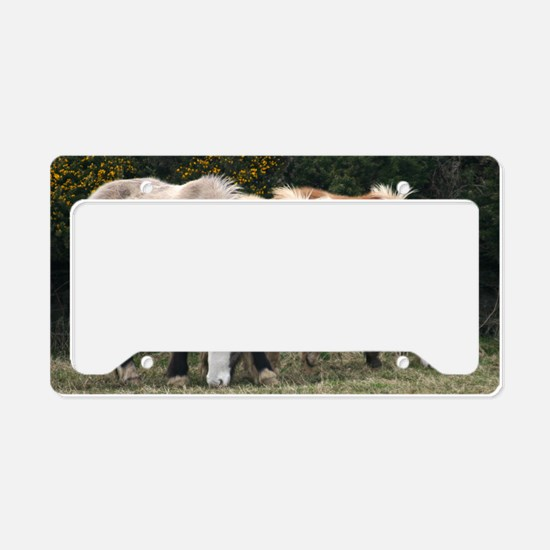coloursBIG License Plate Holder