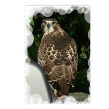 Hawk2.5x3.5a Postcards (Package of 8)