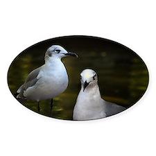 gullsIMG_8403 Decal