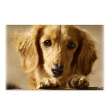 Dachshund 9L007D-15 Postcards (Package of 8)