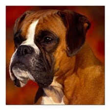 """Boxer red note Square Car Magnet 3"""" x 3"""""""