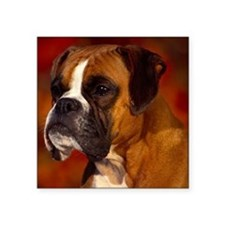 "Boxer red note Square Sticker 3"" x 3"""