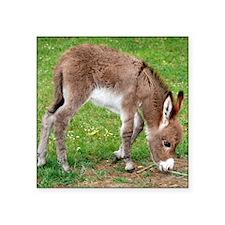 """Newborn Donkey Foal Square Sticker 3"""" x 3"""""""
