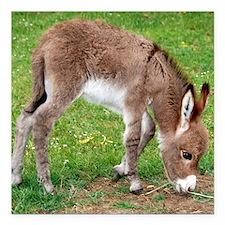 "Newborn Donkey Foal Square Car Magnet 3"" x 3"""