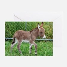 Miniature Donkey Foal Greeting Card