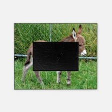 Miniature Donkey Foal Picture Frame