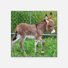 """Miniature Donkey Foal Square Sticker 3"""" x 3"""""""