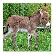 "Miniature Donkey Foal Square Car Magnet 3"" x 3"""