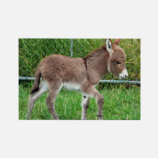 Miniature Donkey Foal Rectangle Magnet